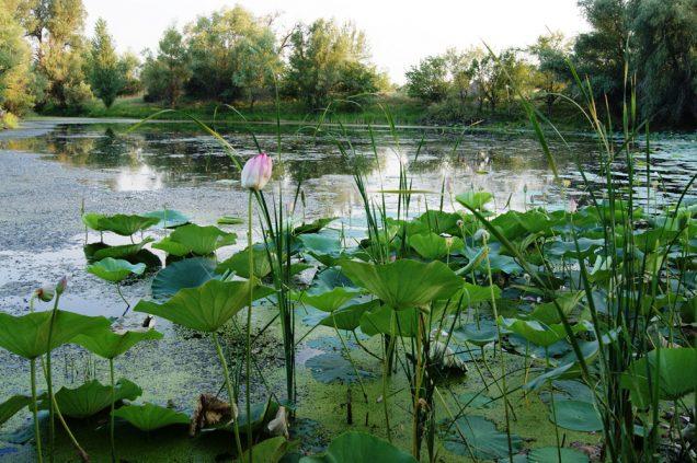 Природа Волгоградской области