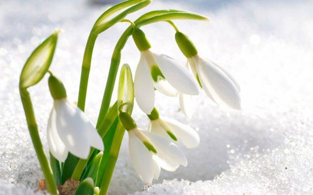 Цветы в Женский день