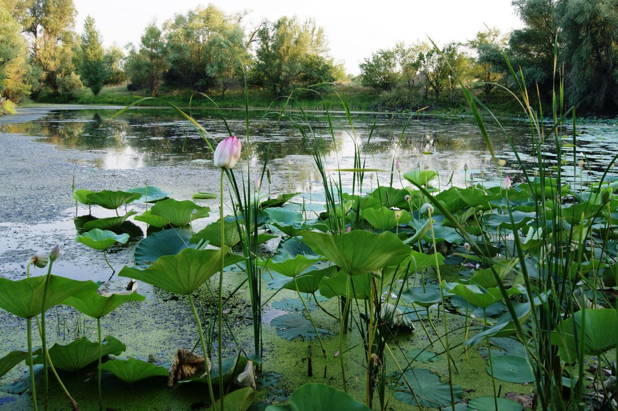 Игнатьева Яна, 25 лет, г. Краснослободск. Озеро лотосов в Лебяжьей Поляне