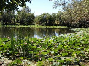 Кисленко Елена, 51 год, Волгоград. Озеро лотосов. Ахтуба